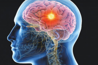 """""""酷""""大脑研究的扭曲观念扼杀了心理治疗"""